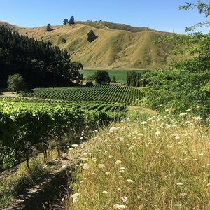 Millton Winery's vineyards and the dry hills that tell the story of this low-rainfall terroir