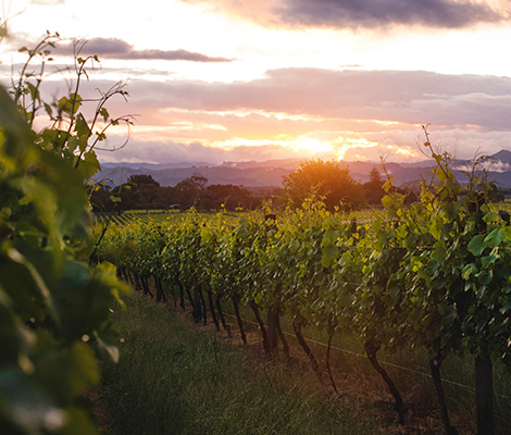 The beauty of the vineyards at Matawhero is exactly what you expect of New Zealand's wine country