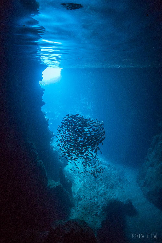 cave-dive-fish-underwater-sun.jpg