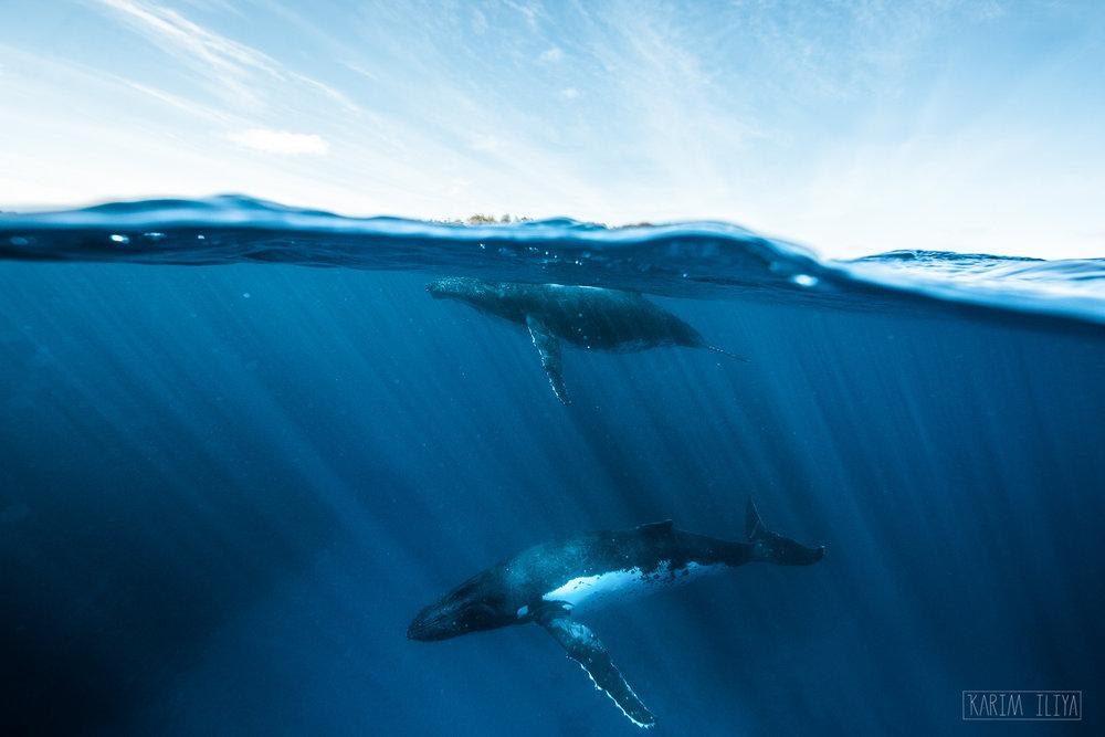 half-whale-sky-ocean-whales.jpg