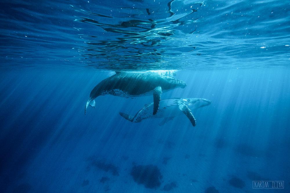 join-whales-tonga-snorkeling-underwater.jpg