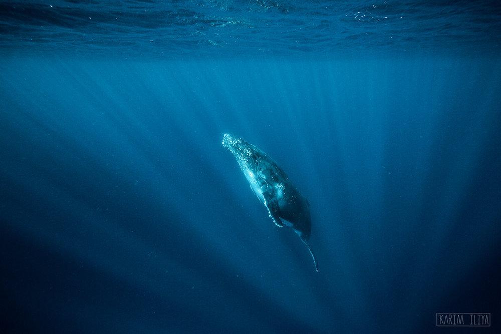 sun-beams-underwater-whale-photograph.jpg