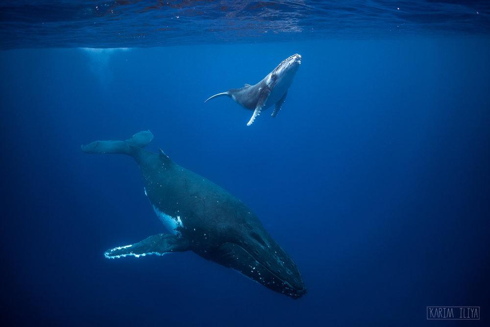trip-vacation-whales-explore-tonga.jpg