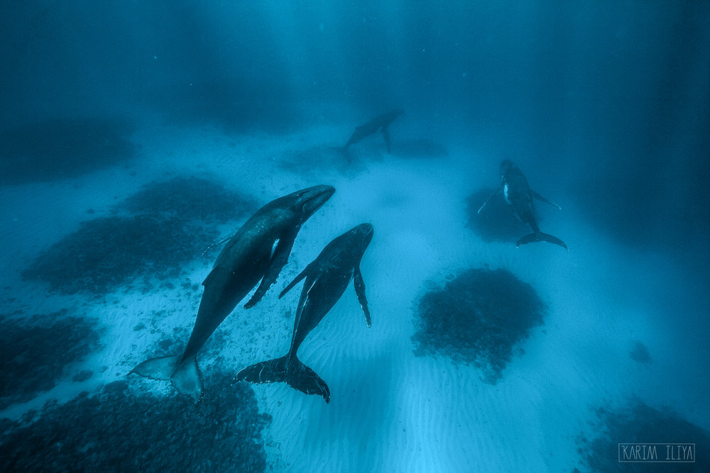 underwater-pod-diving-coral-swim.jpg