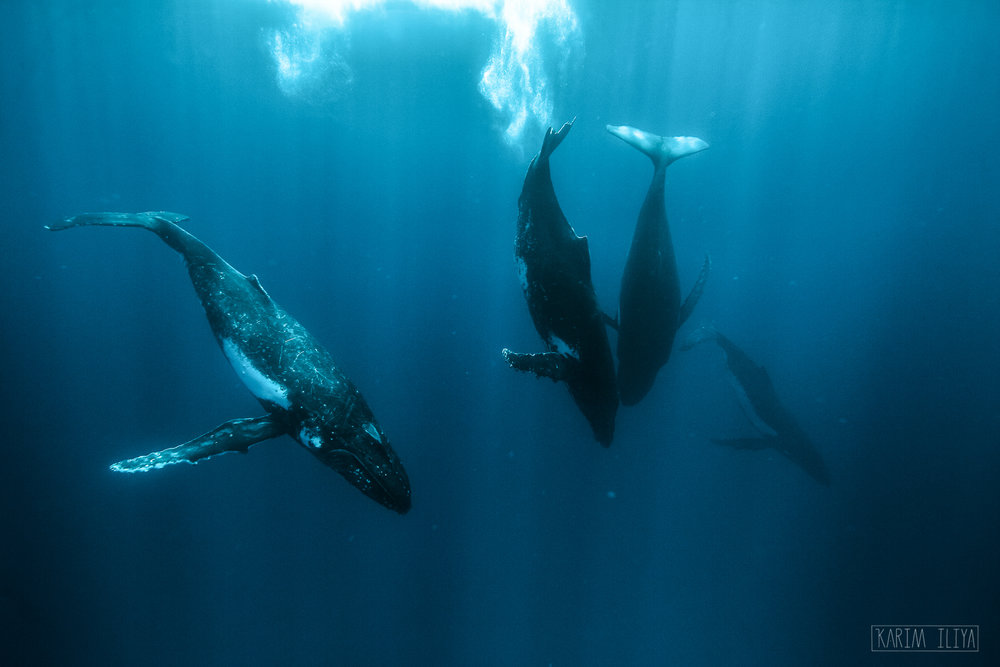 whale-photography-water-ocean-tonga.jpg