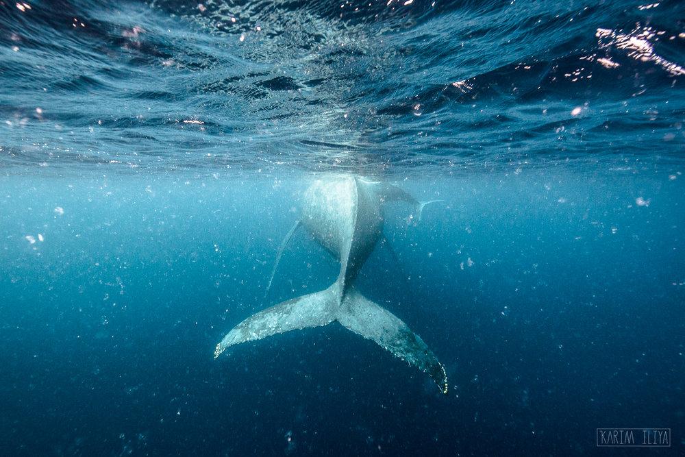 whale-tail-snorkel-swim-ocean.jpg