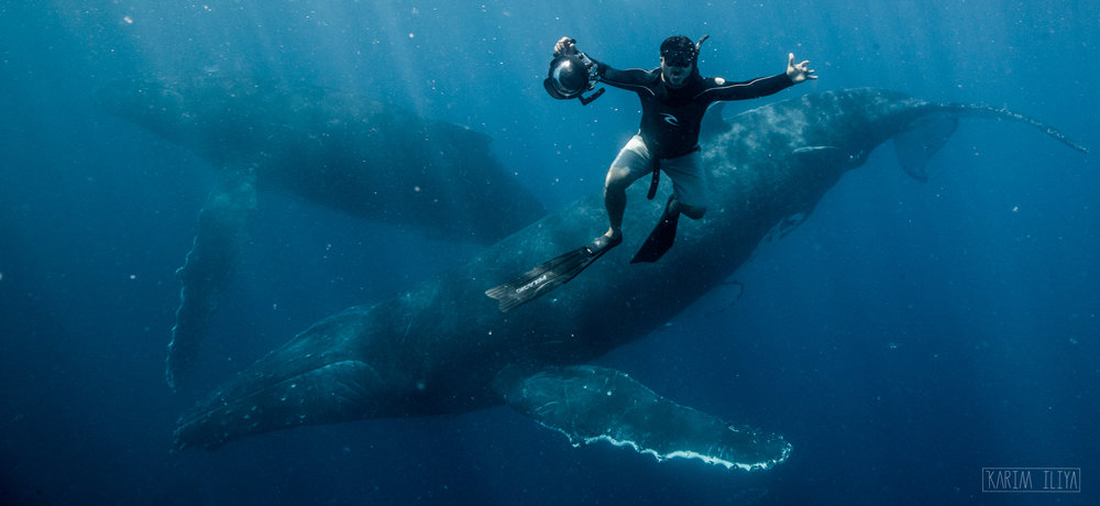 whales-tonga-dance-with-whales-swim.jpg