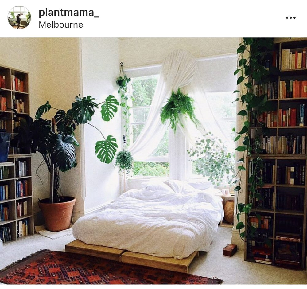 Well on the way to jungle bedroom goals. As long as a bug doesn't fall in my mouth while I'm sleeping, we're good. Photo by  Plant Mama