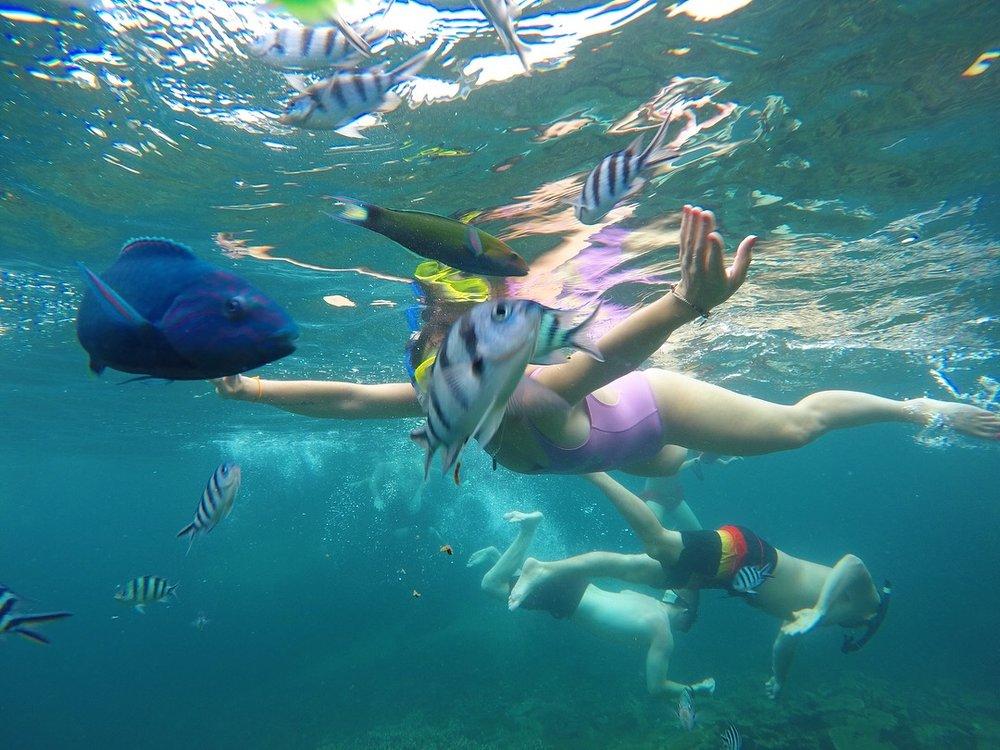 Being a mermaid/ Scuba Steve