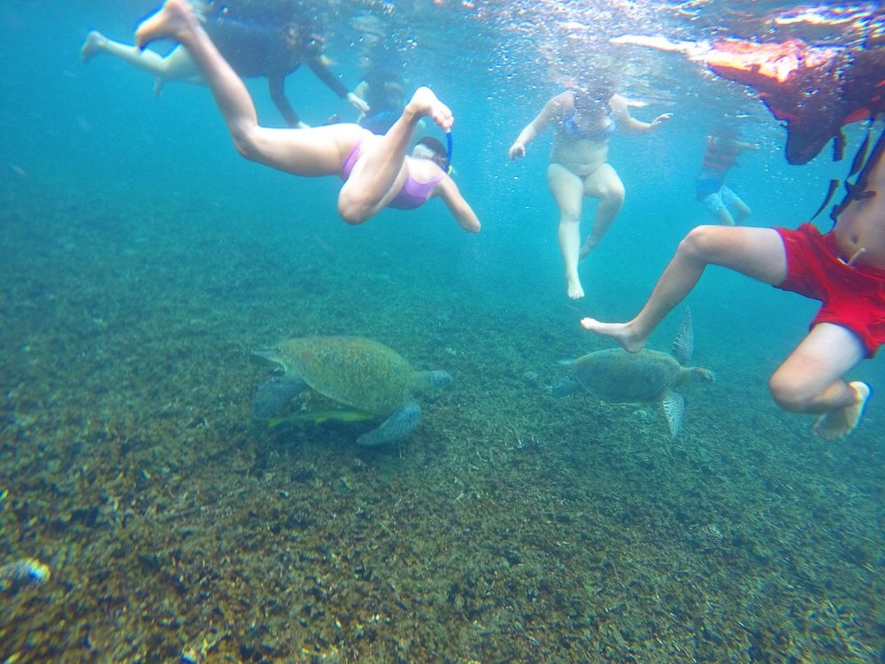 OMG I CAN'T BELIEVE WE GOT TO SWIM WITH SUPER COOL TURTLES