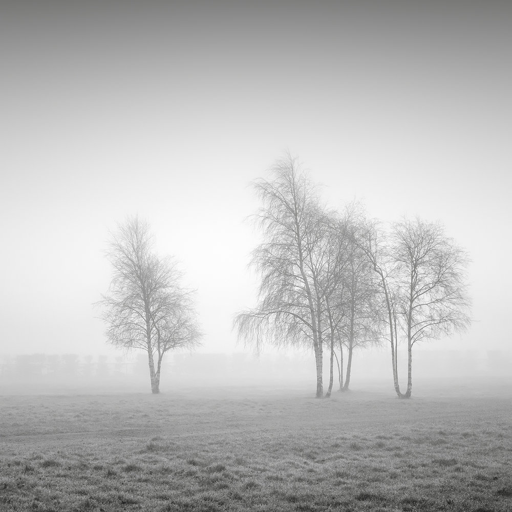 Trees in Mist Dublin 2015