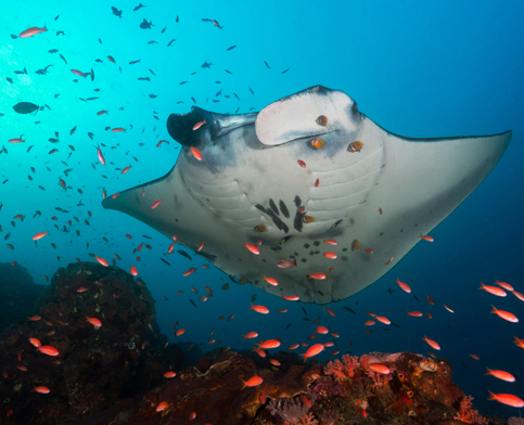 mantaray copy 1.jpg