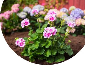 Lær å dyrke dine egne blomster -
