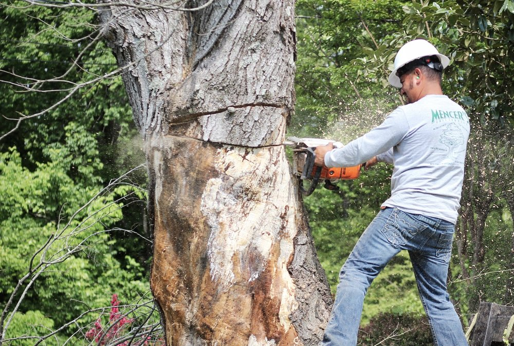 Mencer's Tree Service Professional Cutting Down a Tree