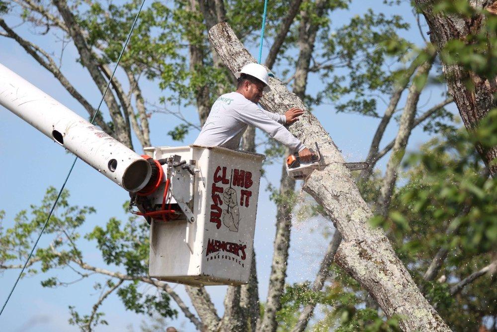 Tree care professional in bucket truck trimming tree limb.