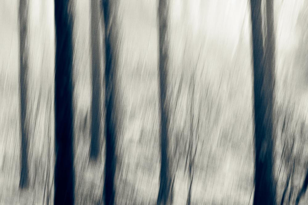 020_TreeBlur#1.jpg