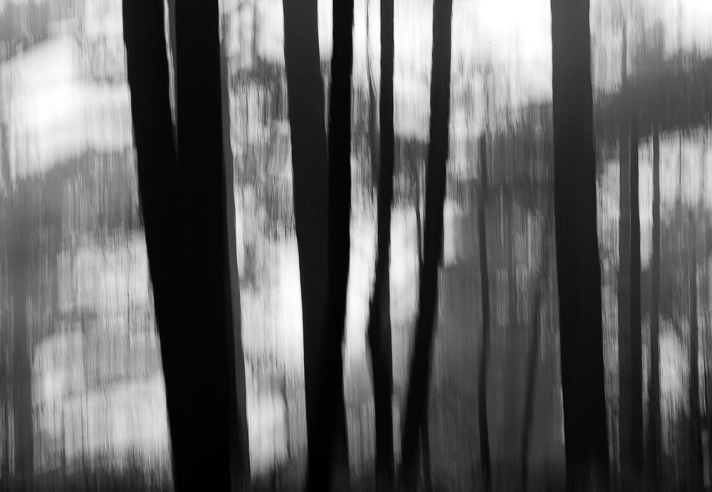022_TreeBlur#2.jpg