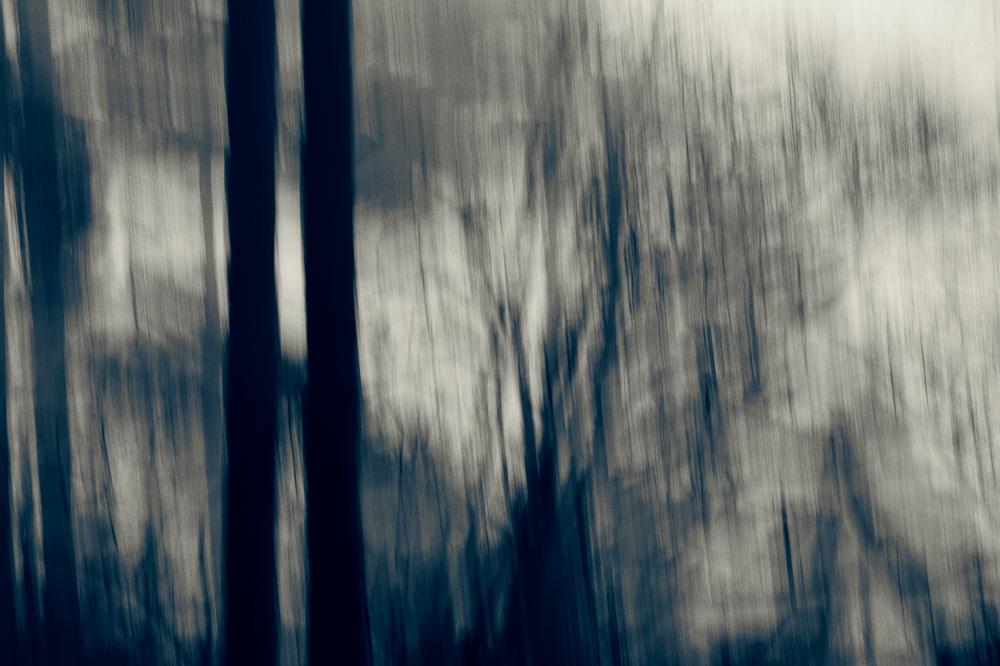 021_TreeBlur#8.jpg