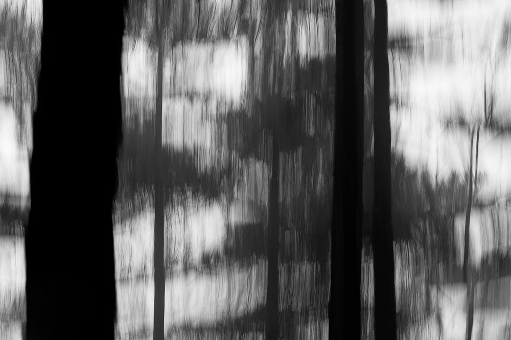023_TreeBlur#4.jpg