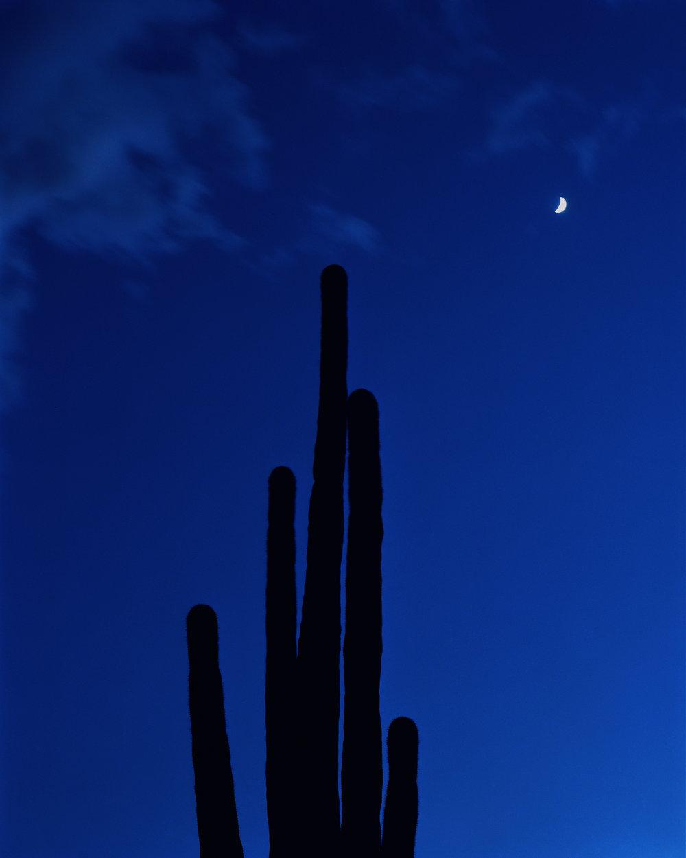 saguaro-004.jpg