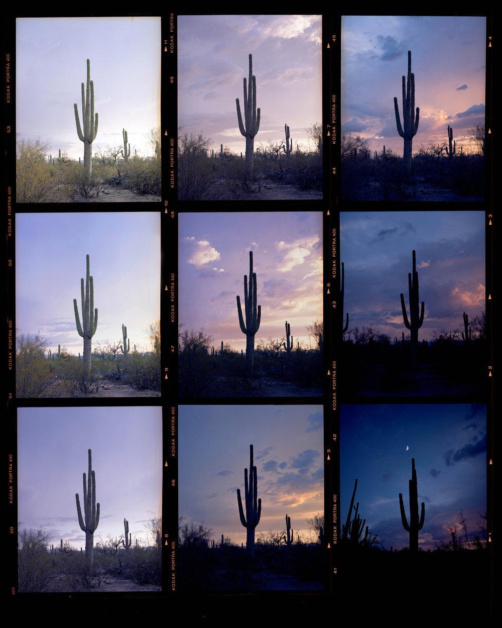 saguaro-contact.jpg