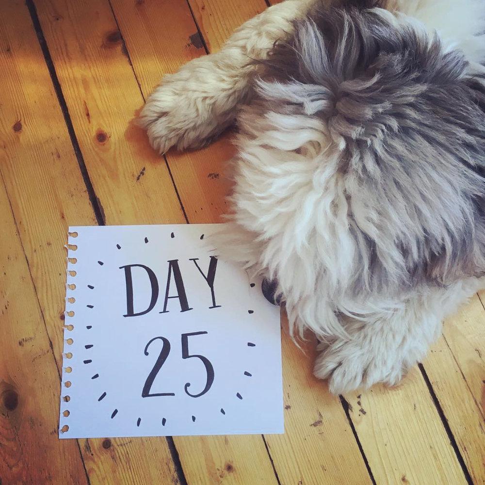 Day 25.jpg