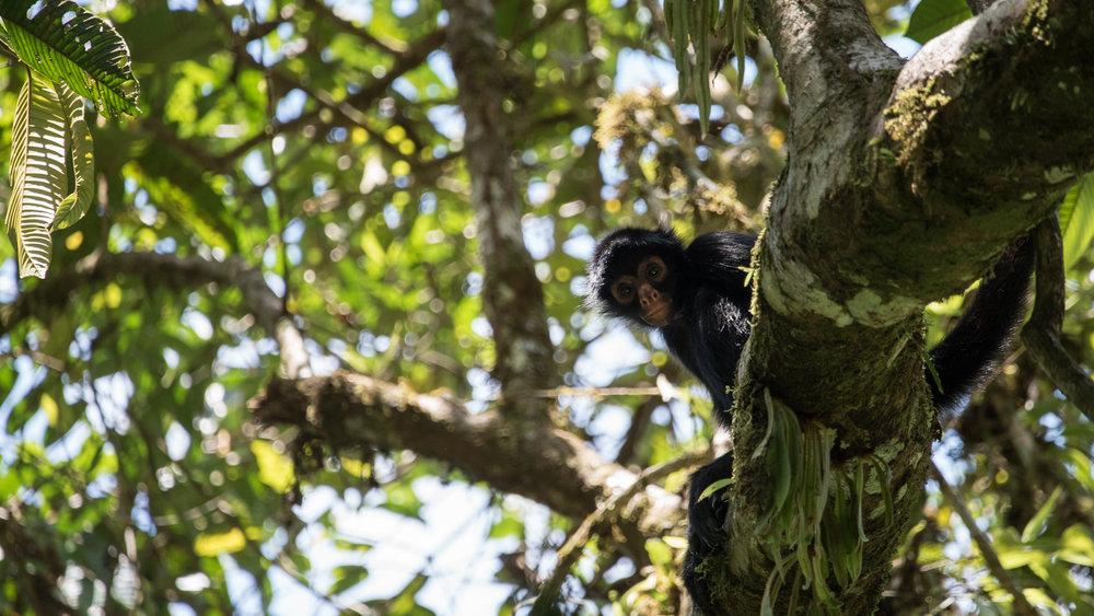 baby-spider-monkey-jone-troconis-08379.jpg