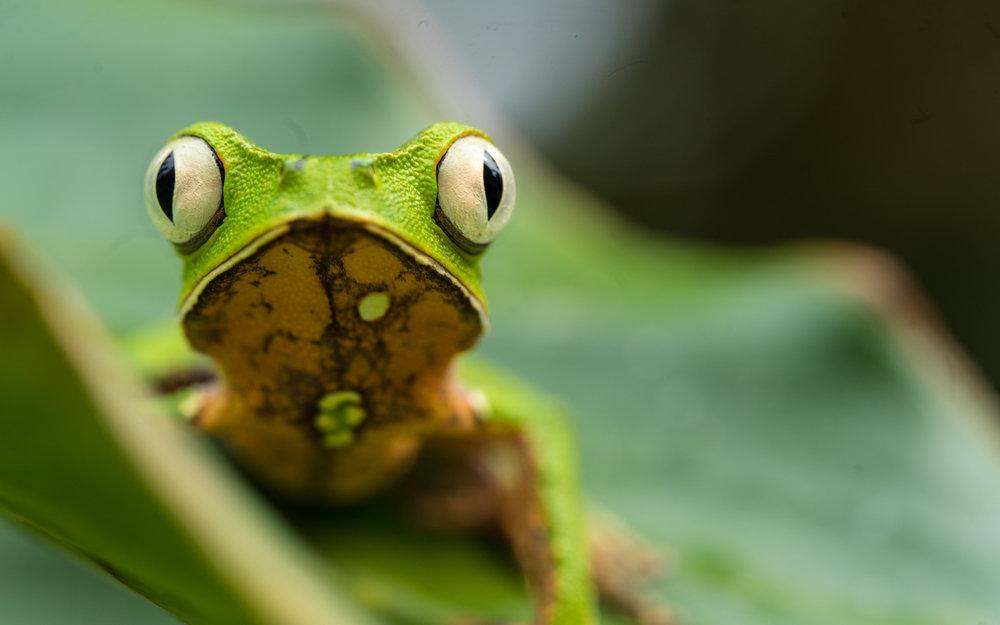 tree-frog-jone-troconis-08690.jpg