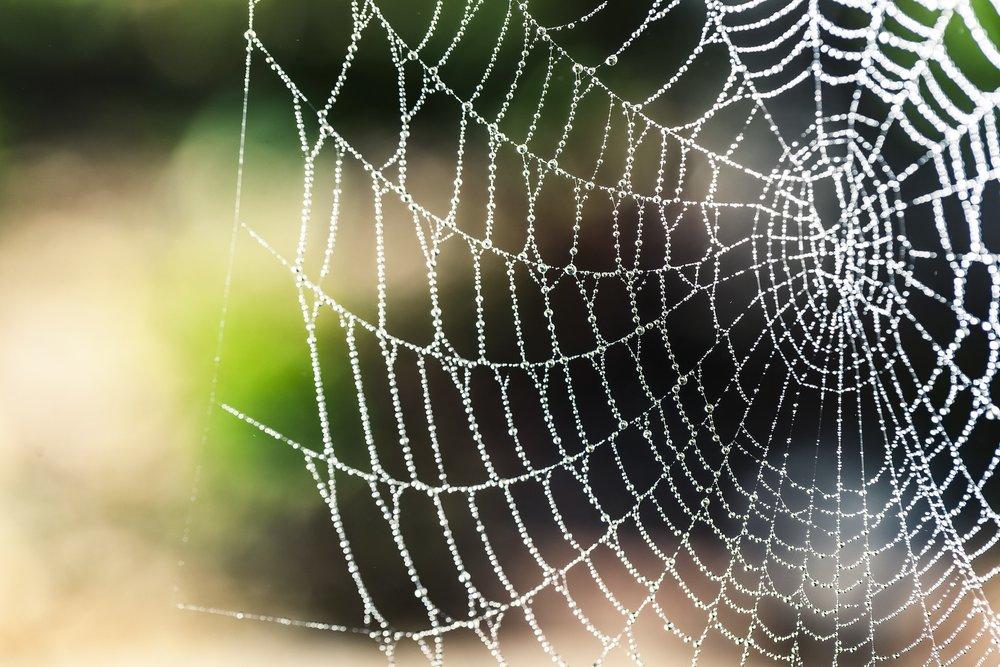 spider-silk-1287407_1920.jpg