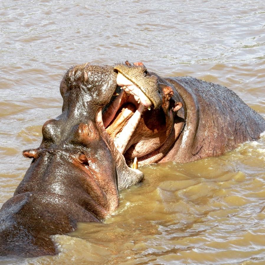 OrTSANSäSSIGER anbieter - Im Gegensatz zu den meisten Safarianbietern sind wir in Tansania ansässig. Sie werden in direktem Kontakt mit unserem Team vor Ort sein. Keine Agenturen, kein Outsourcen Ihrer Safari. Wir regulieren die hohe Qualität und Standards unserer Services gründlich und eigenhändig, um Ihnen das Safarierlebnis Ihres Lebens anbieten zu können. Um sicherzustellen, dass Sie mit uns zeitnah kommunizieren können, haben wir Büros sowohl in den USA als auch in Tansania und wir sprechen deutsch!