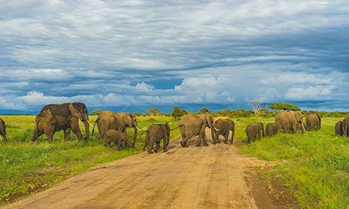 Sababu_Safaris_Selous_500x300px.jpg