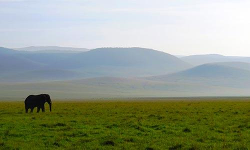 Sababu_Safaris_Ngorongoro2_500x300px.jpg