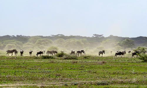 Sababu_Safaris_NorthernSerengeti_500x300px.jpg