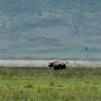 SababuSafaris_Rhino.jpeg