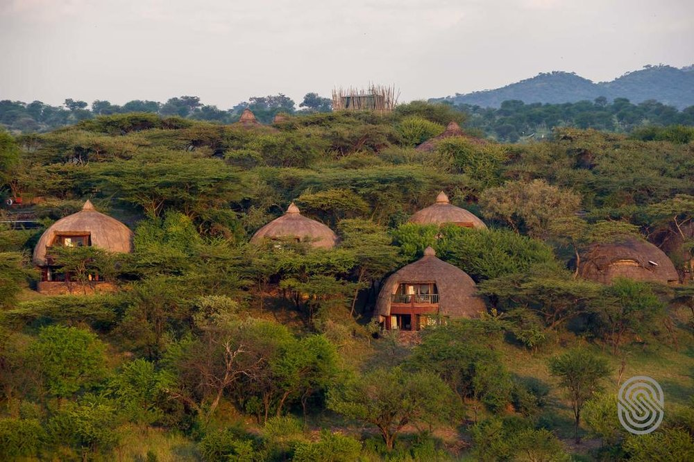 Serengeti Serena1.jpg