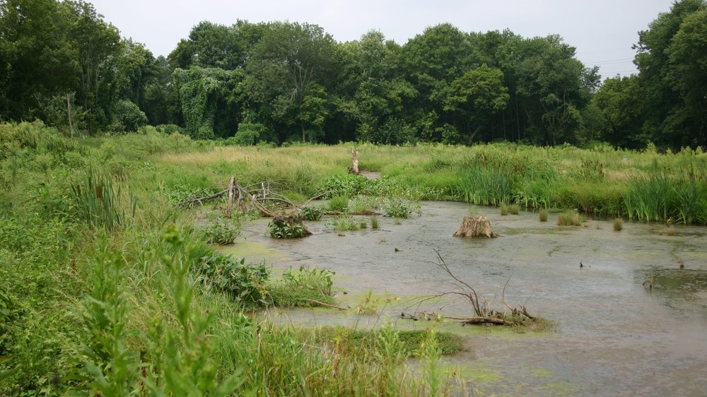85428-Civitan Wetlands.JPG