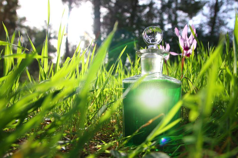 bottle-magical-green-potion-forest-sunlight-110258967.jpg