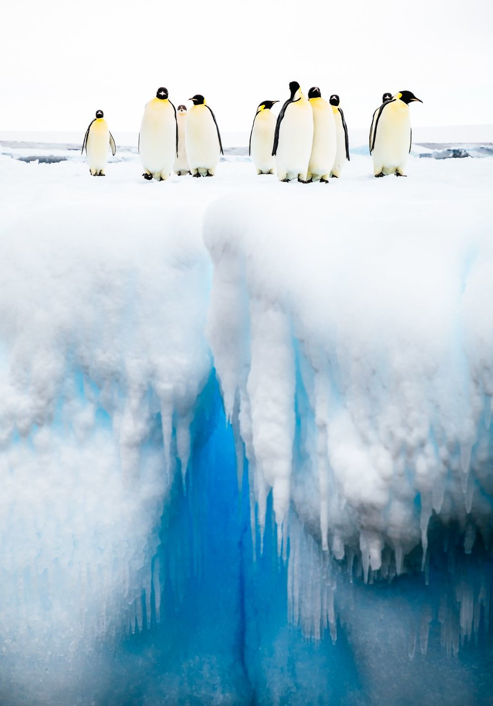 PHOTO CREDIT:  Andrew Peacock LOCATION: Ross Sea (Antarctica)