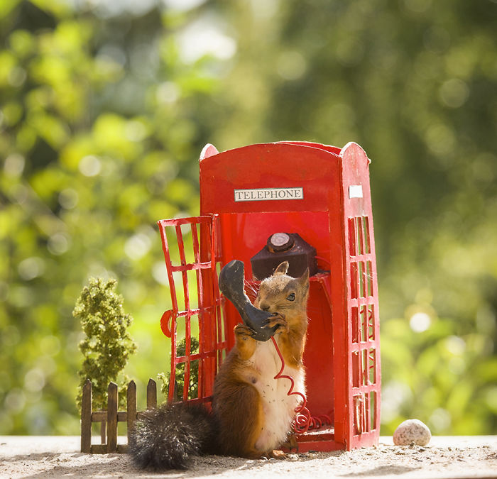 squirrel phone booth.jpg
