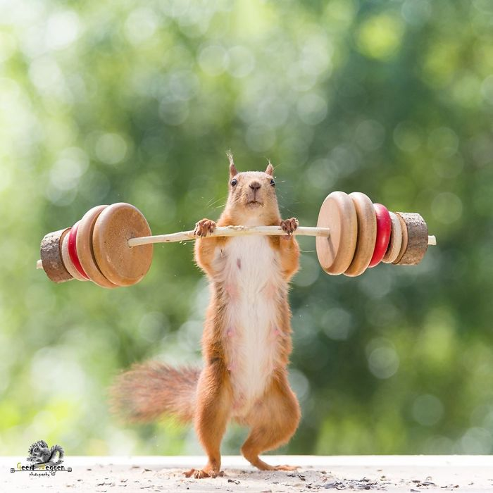 squirrel working out.jpg