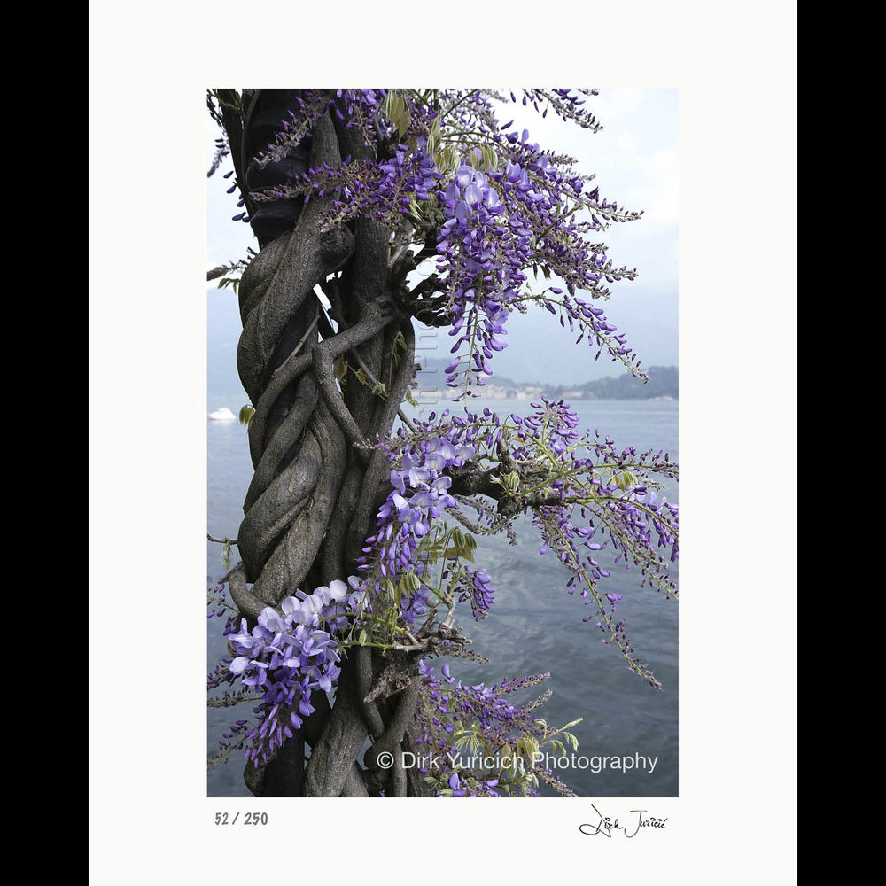 """Sample Photographic Paper Print: 11""""x17"""" Image on 16""""x20"""" Paper"""