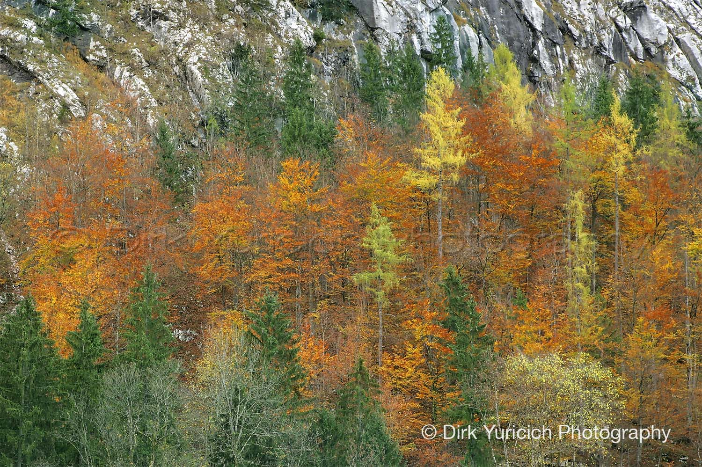 Hallstatt Austria Autumn Trees
