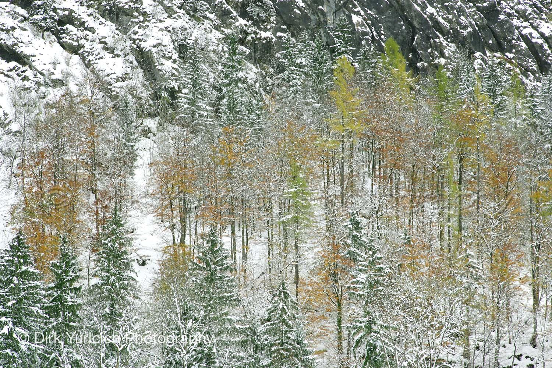 Hallstatt Austria Snow Trees