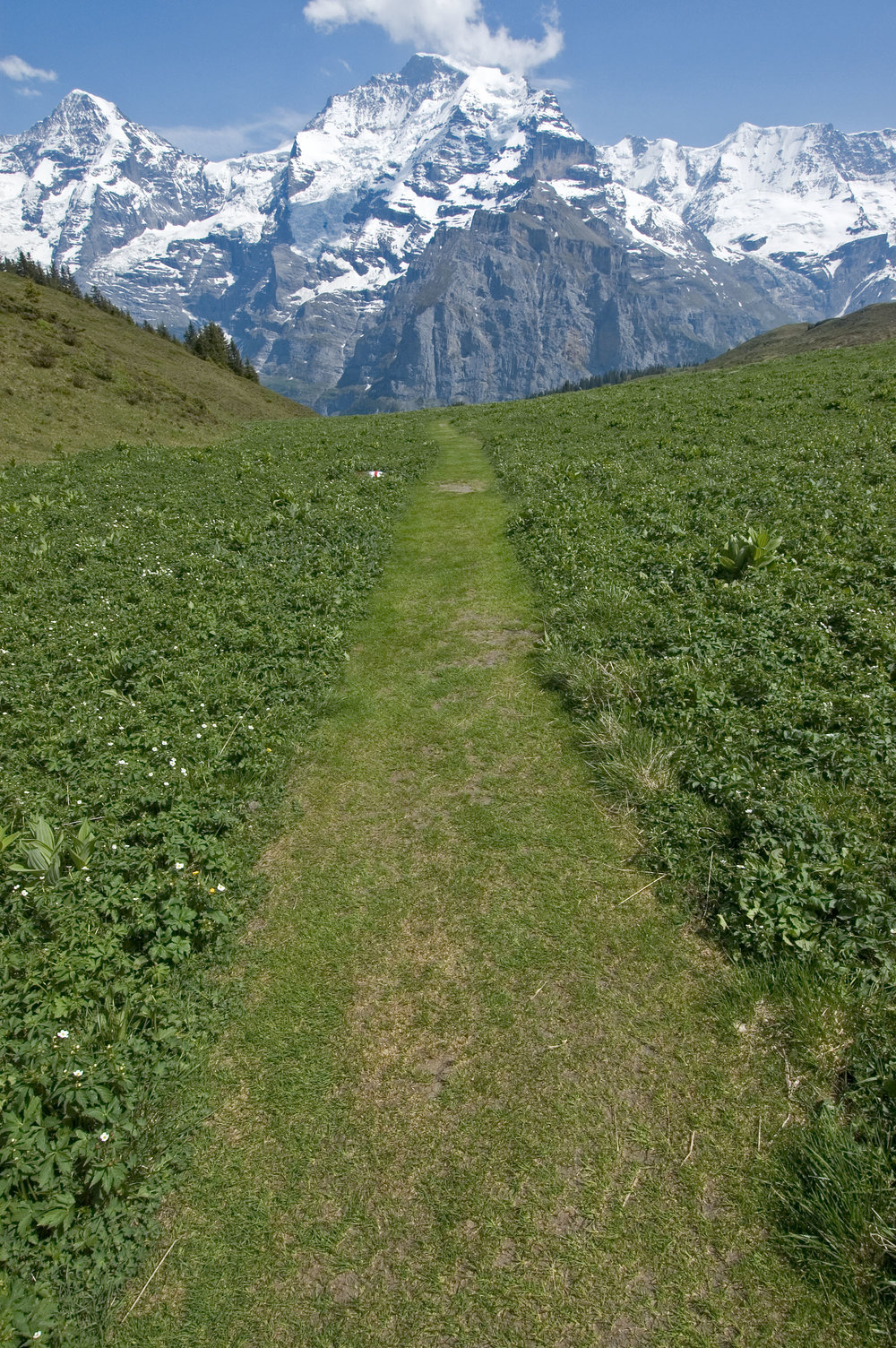 Murren hike - path 3.jpg