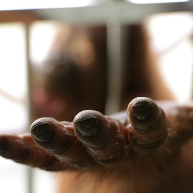 Borneo Wildlife Warriors - web series -
