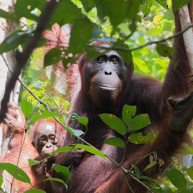 Borneo Jungle Diaries - web series -