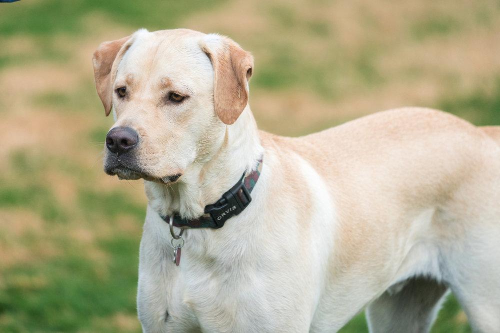 handsome dog one blurb 020118.jpg