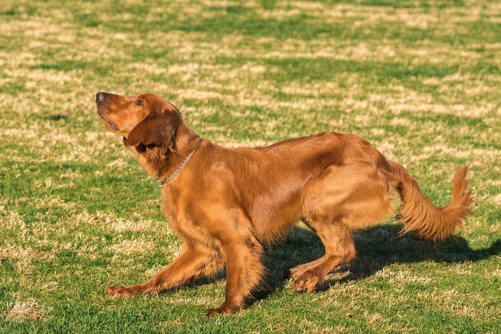 pretty dog four blurb  020218.jpg