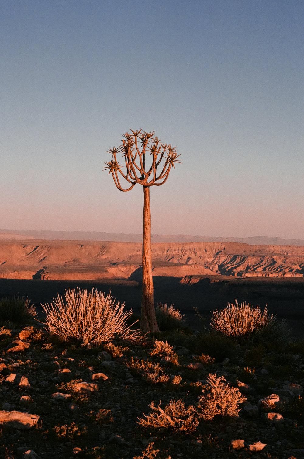 35mm Namibia 2018 _ Edited -34.jpg