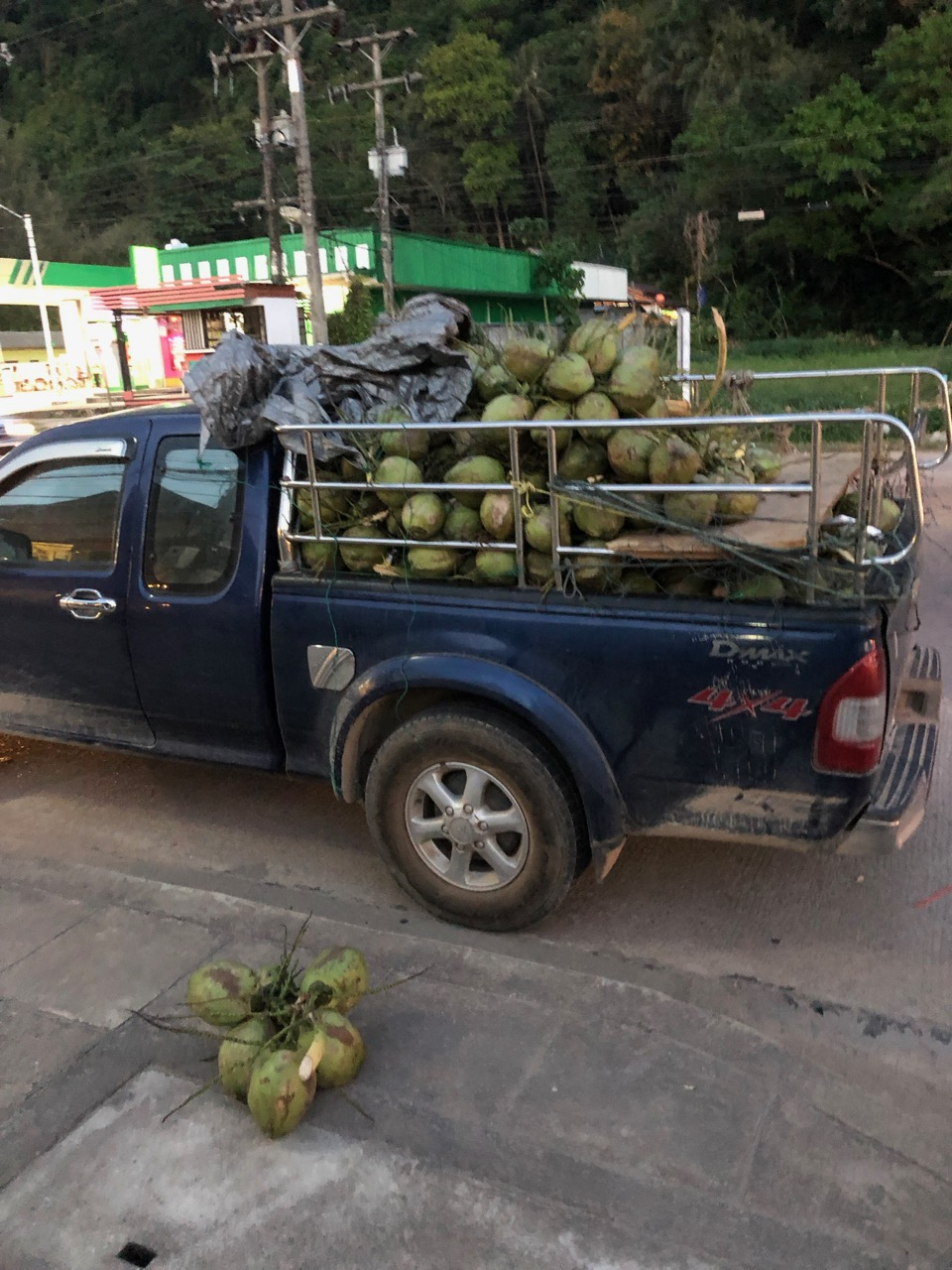 Kokosnötsleverans. De är verkligen överallt här.